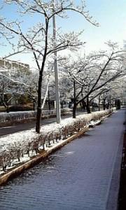 kotei_yuki3